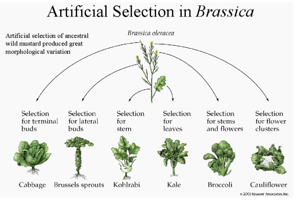 Evolution & Brussels Sprouts | Of Cookies & Carrots